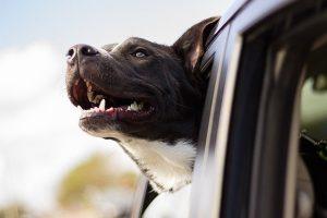 Un formulaire pour un chien de 2eme categorie